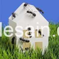 artikel arsitektur_Semut